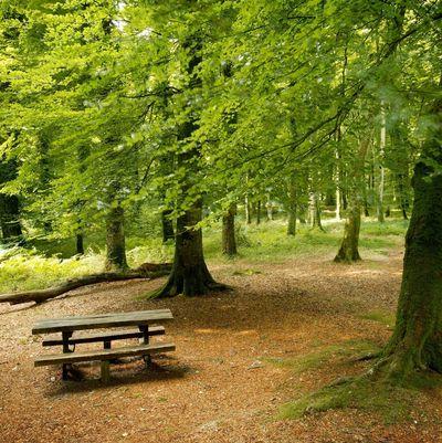 Les élus, moteurs des Chartes Forestières de Territoire (CFT)