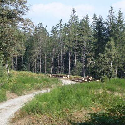 Schéma d'accès à la ressource forestière <br>SARF