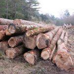 Quirbajou bois local